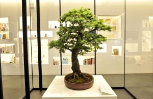 70 year old Japanese Larch installation by Peter Warren at Japan House London